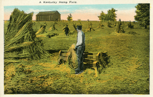 Hemp Field - Kentucky 2